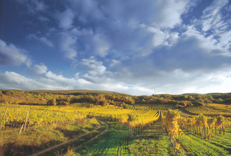 Weingarten wandern Wienerwald