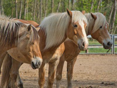 Reiturlaub am Ponyhof